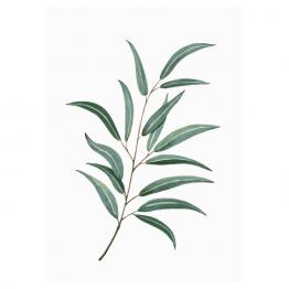 lámina eucalipto