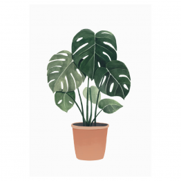 lámina planta monstera