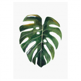 lámina hoja monstera